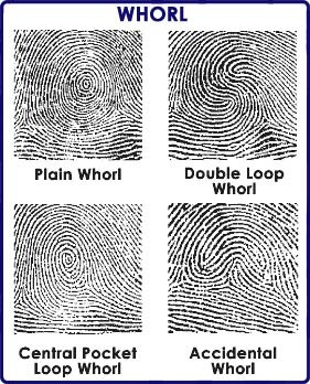 Loops, Arches, Whorls & Crafts – FingerPrint Fun 3/22 ...